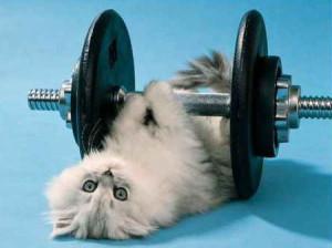 Weak Kitten