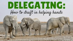 Delegating.